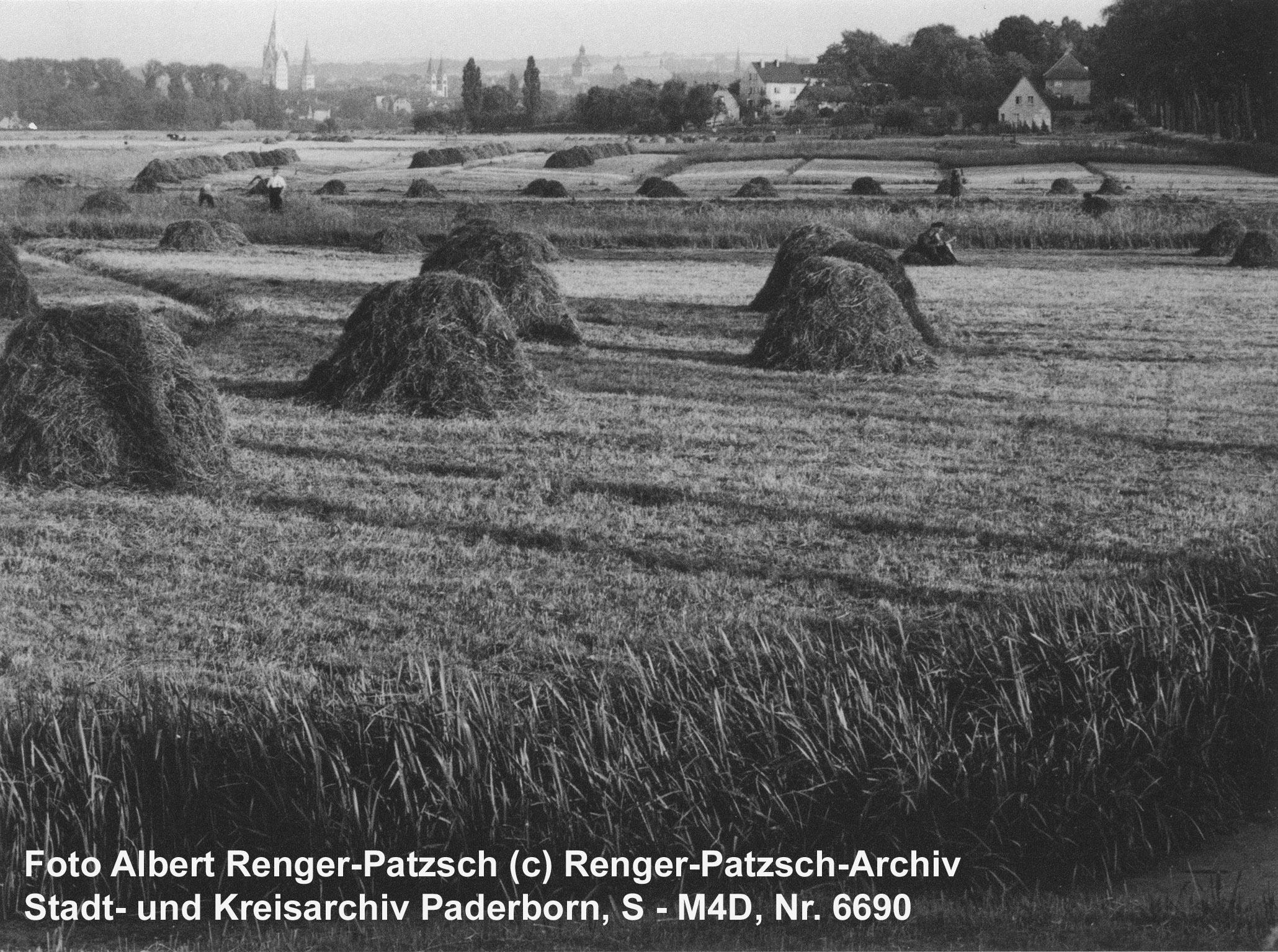 Heuernte auf den Paderwiesen, um 1940 (Kreis- und StadtA Pb, Foto Ferdinand Sieweke, S - M5/01GD, Nr. 136)