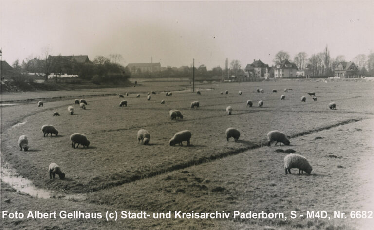 Schafhude auf den Flößwiesen, Ostern 1939 (Kreis- und StadtA Pb, Foto A. Gellhaus, S-M4D, Nr. 6682)